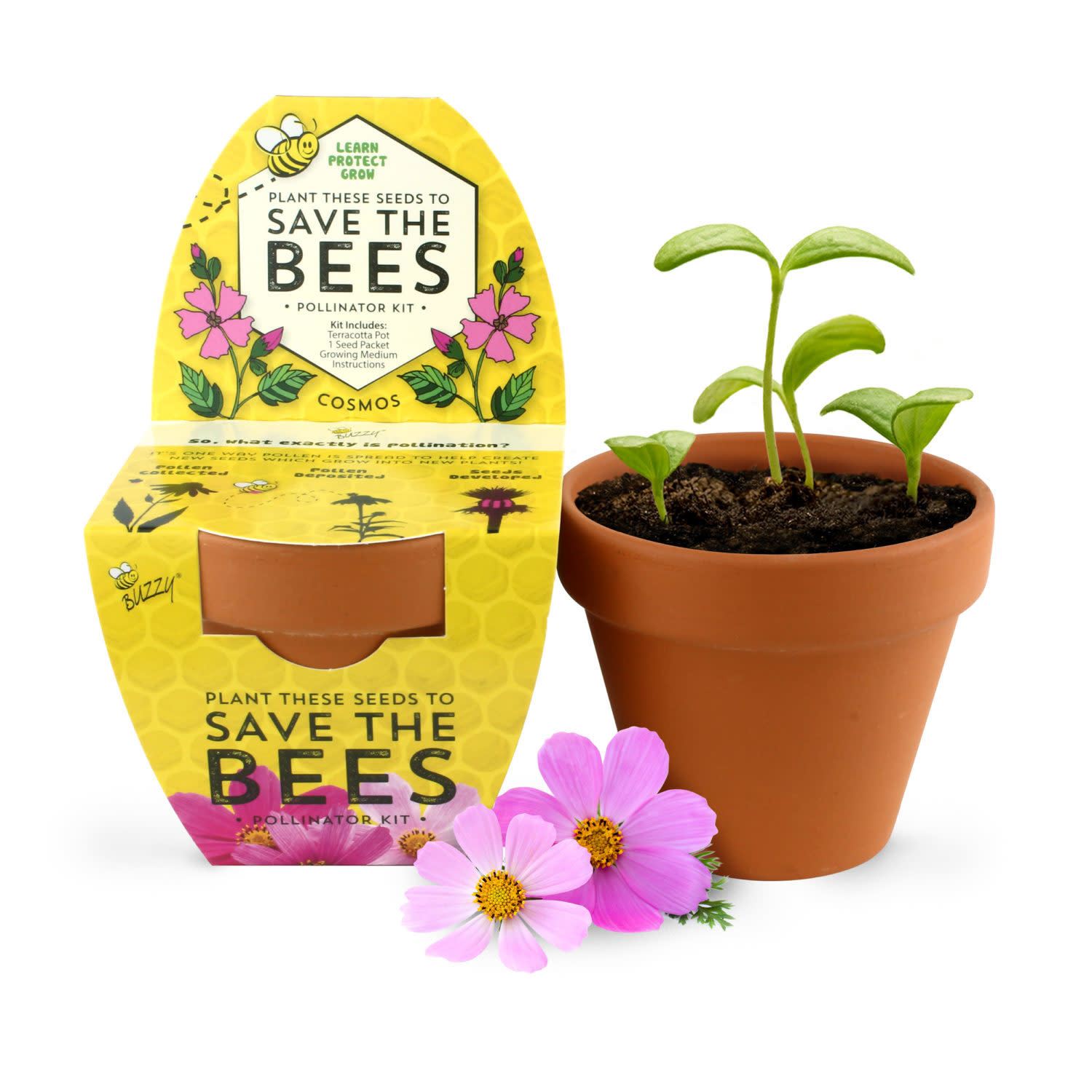 Save The Bees Cosmos Kit by Buzzy