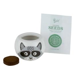 Wild Adventure Raccoon Ceramic Grow Kit by Buzzy