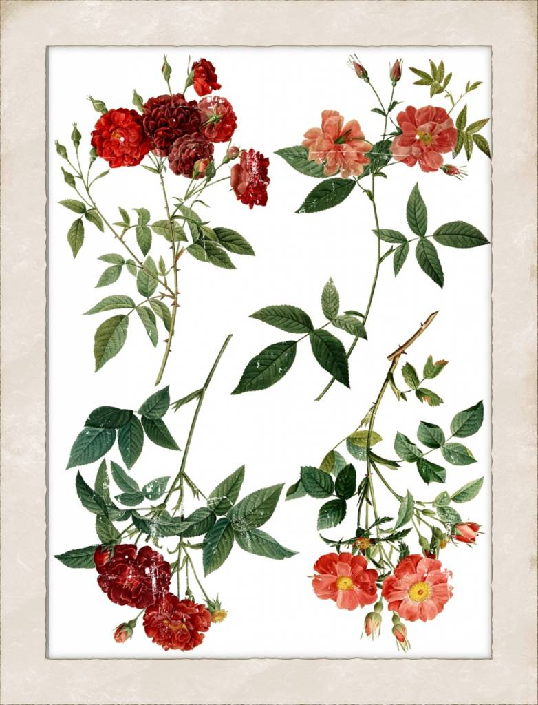 Iron Orchid Designs Iron Orchid Designs - Redoute 4 Decor Image Transfer - DEC-TRA-RED