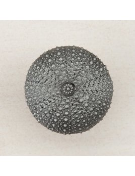 Sea Urchin Pewter Knob