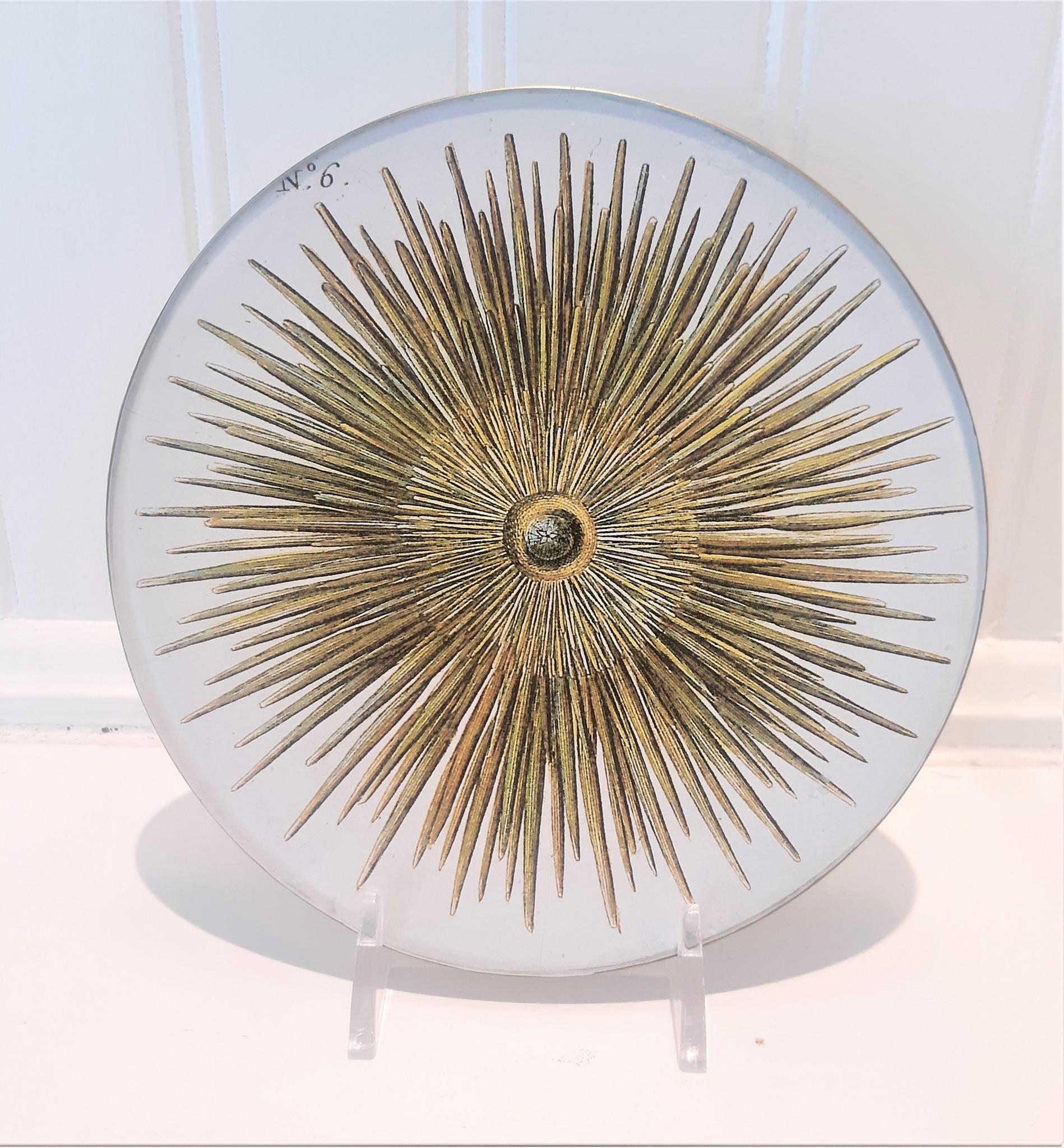 Harpin Urchin #6 5x5