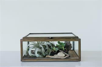 Wood & Glass Display Box