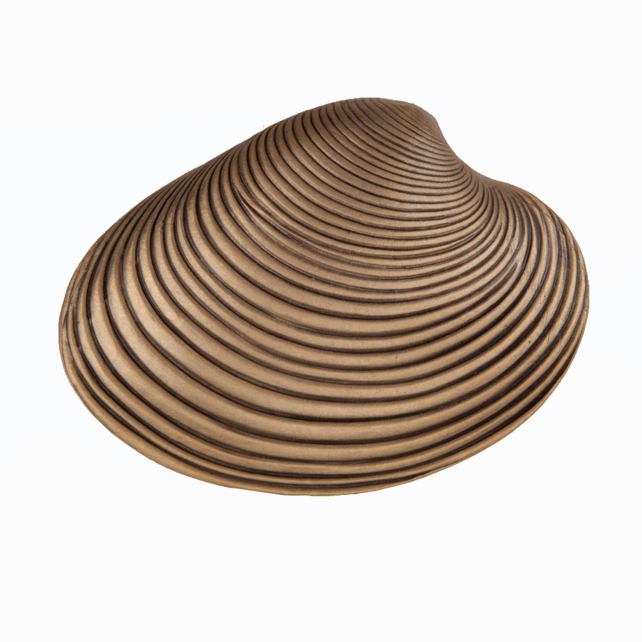 Clam Shell Knob
