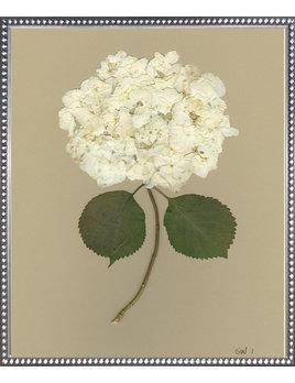 White Hydrangea I 20x24