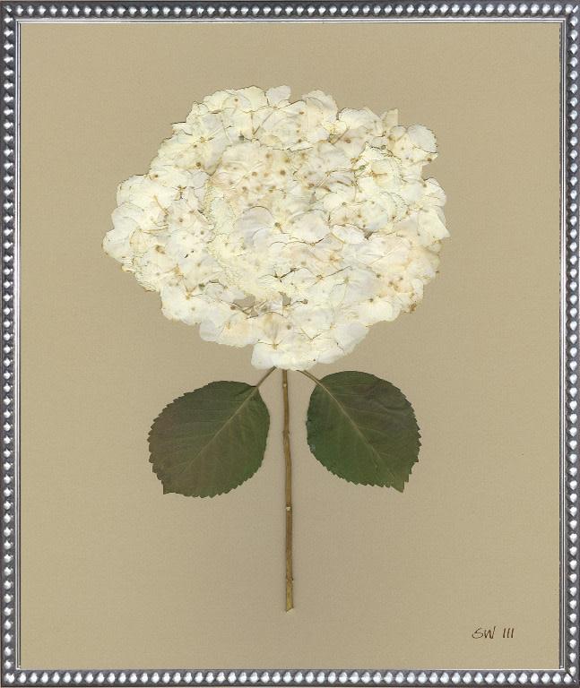 White Hydrangea III 20x24
