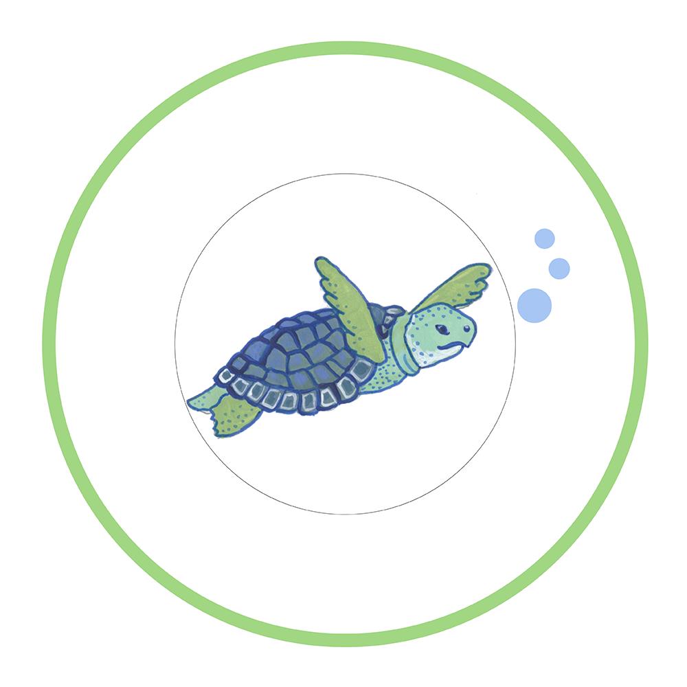 "7.5"" Round Plate - Turtles"