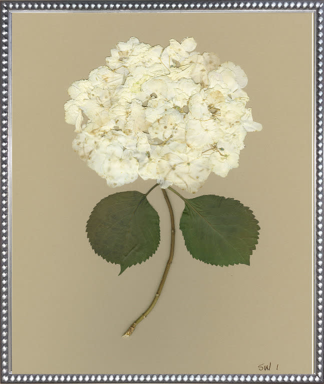 White Hydrangea I 20x24 with Matting