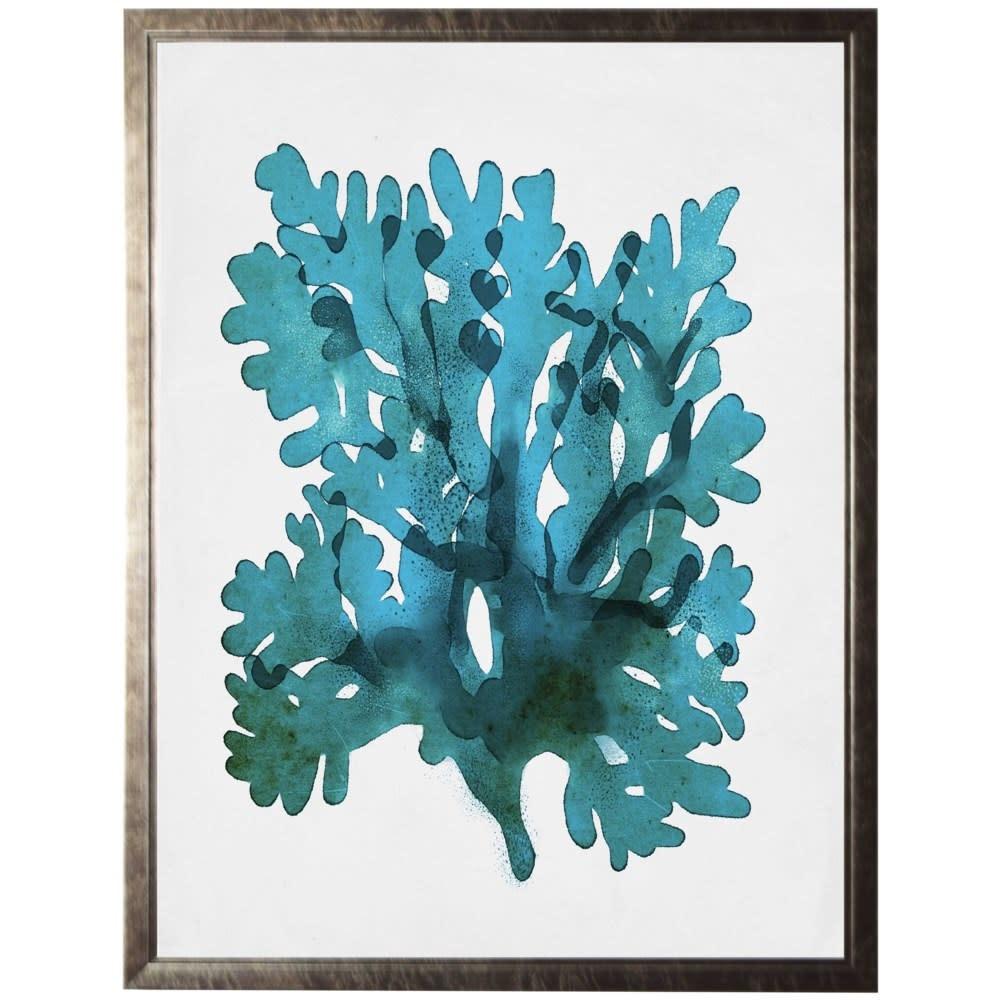 Coral B 22x28