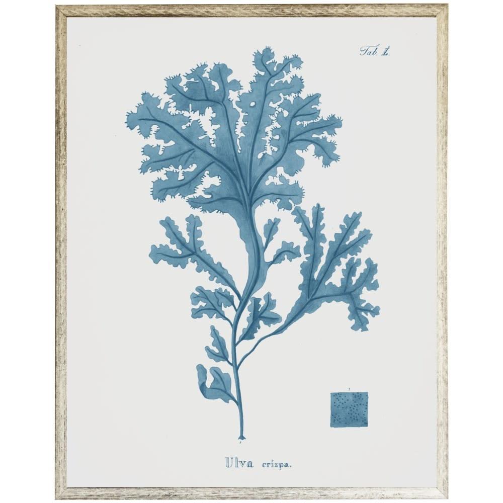 Blue Coral B 18x24