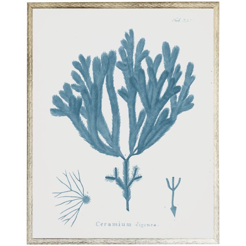 Blue Coral E 18x24