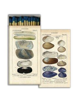 Seashell Specimens Matches