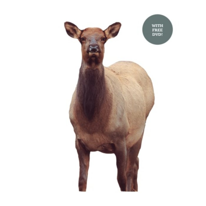 Montana Decoy Eichler Elk - 0041