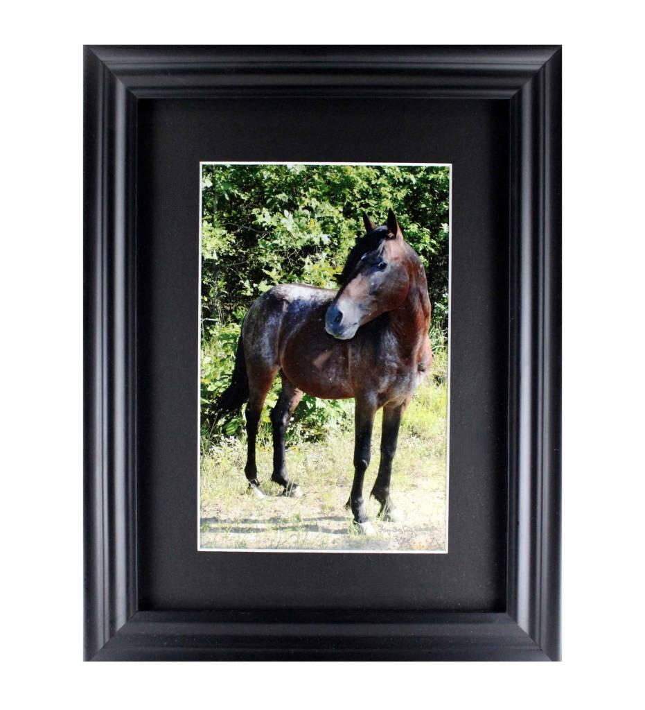 """*LS """"DR. PHILL II, CHOCTAW STALLION"""" Framed Matted Print LIMITED EDITION"""