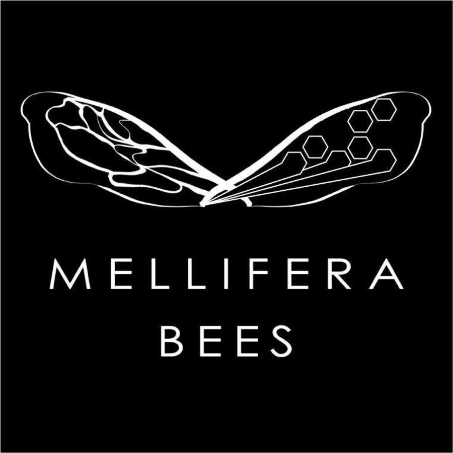 mellifera bees