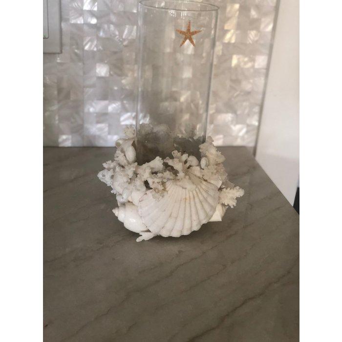 Shell Vase / Hurricane Lamp