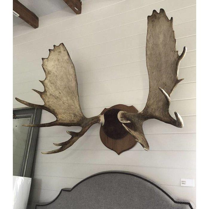 Moose Antler Wall Decor