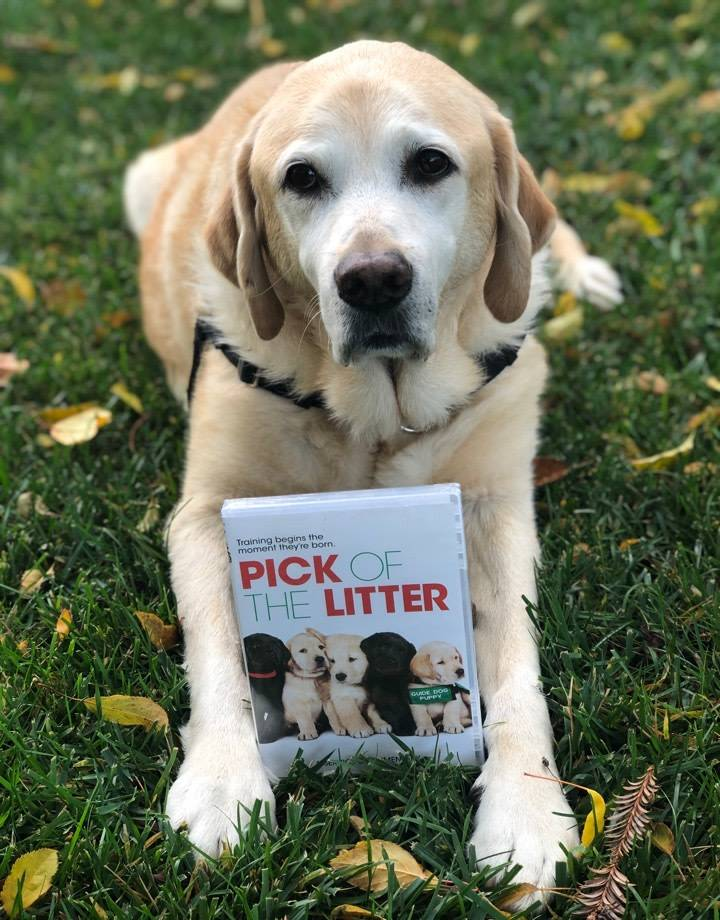 Pick of the Litter DVD