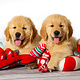 Holiday card - Golden - 10pk