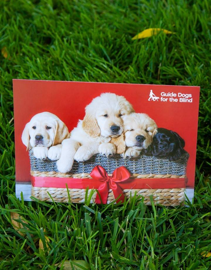 Holiday Cards - Pups in basket