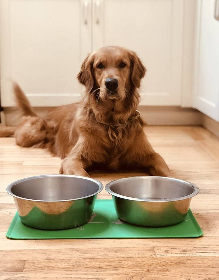 Dog Placemat - green