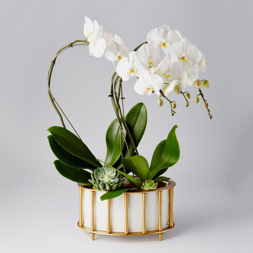 MH Cachepot - Cavalcade - Brass/White
