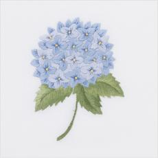 MH Hand Towel - Hydrangea Blue - Ivory Cotton
