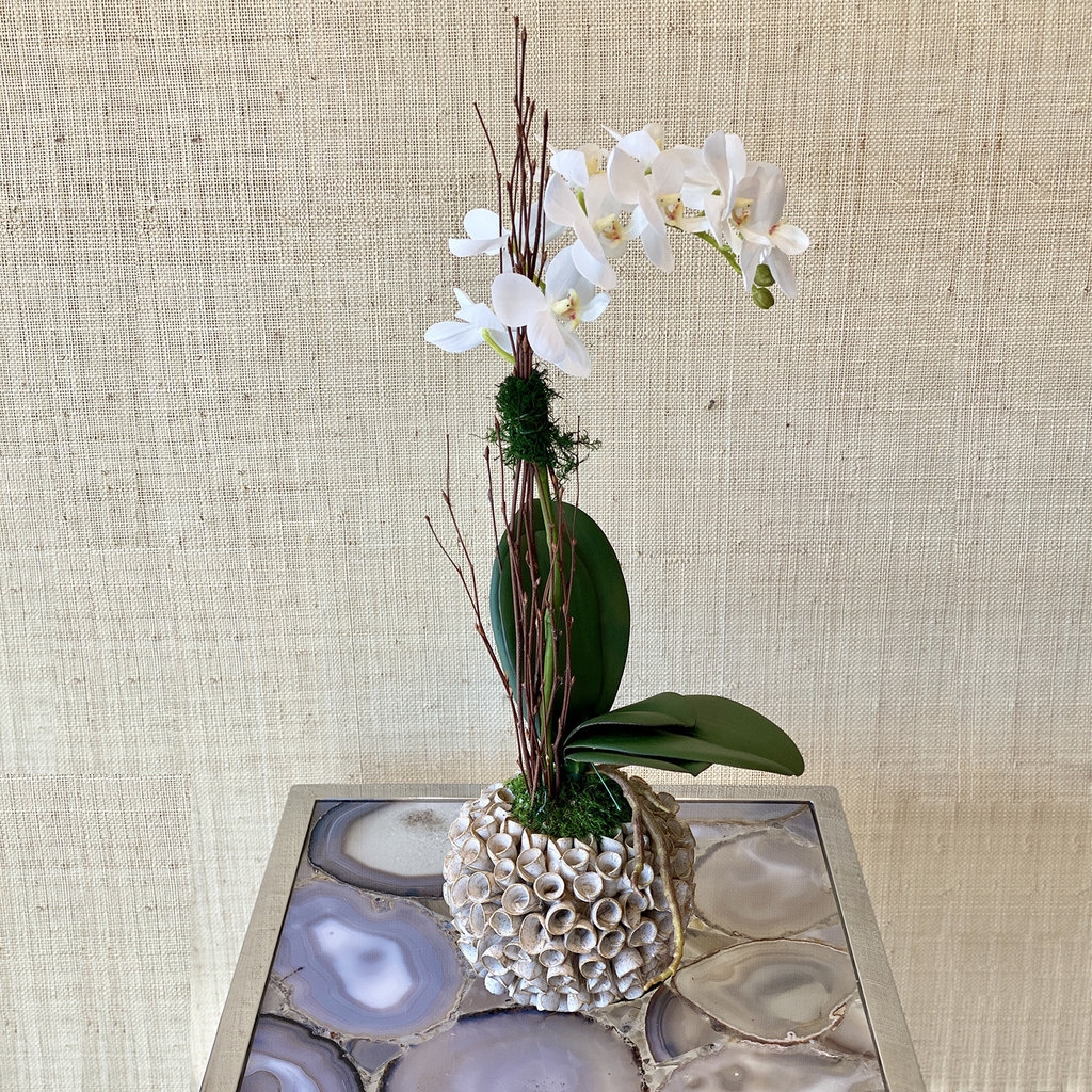 MH Preserved Arrangement - White Phal Orchid in Barnacle Vase - 9x9x20