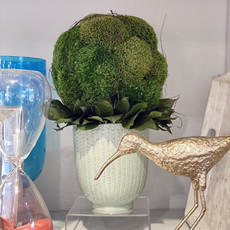 MH Dried Arrangement - Moss Topiary in Celadon Cachepot - 8.5D x 14H