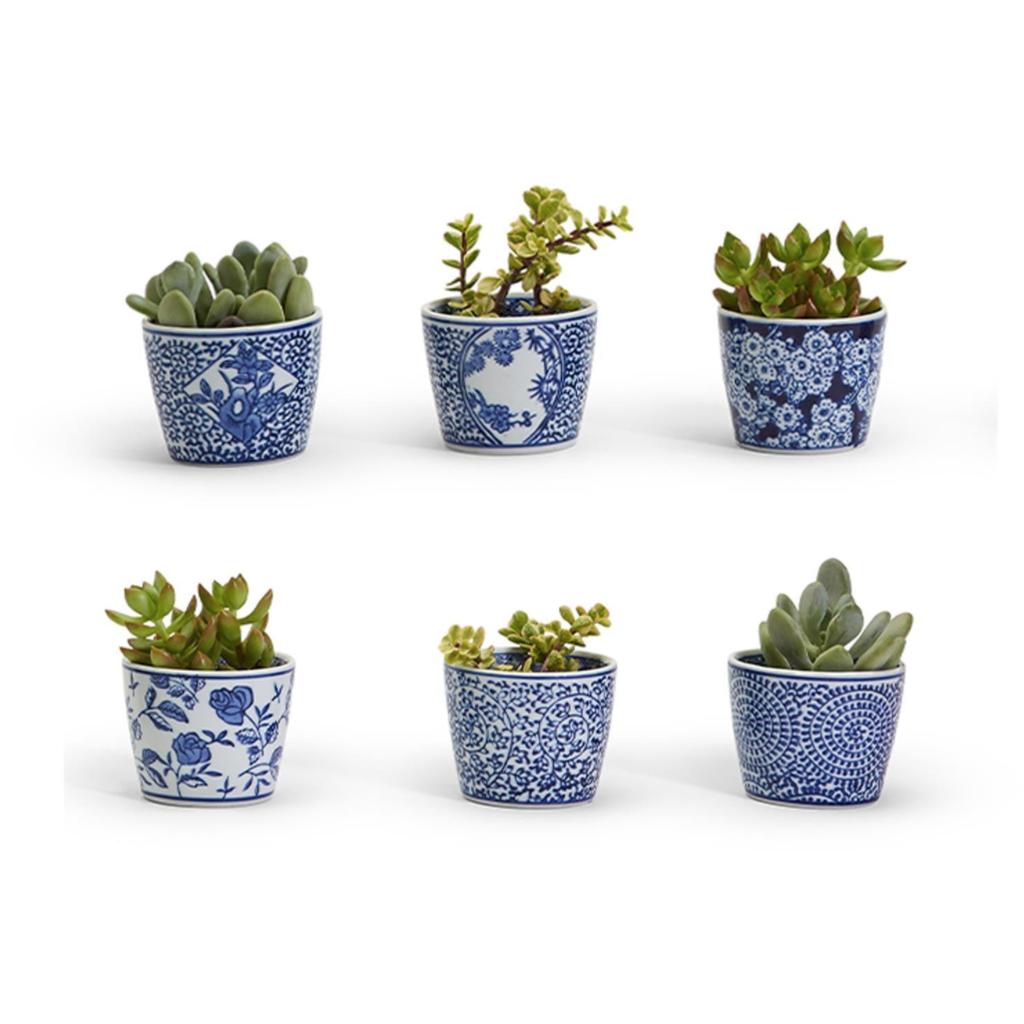 "MH Cachepots - Blue & White - Mini - Assorted - 2 3/4"" H x 3 1/2"" D"