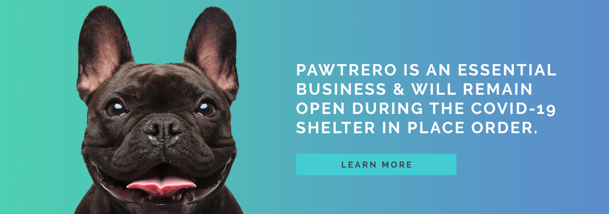 Pawtrero Statement on Covid-19
