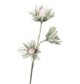 Botanica#923
