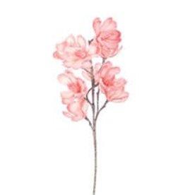 Botanica #874
