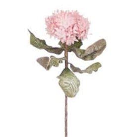 KALALOU Botanica #1117