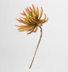 KALALOU Botanica #1147