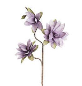 Botanica #780