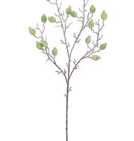 KALALOU Botanica #3121