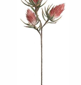 Botanica #809 Pink Feathered Bulbs