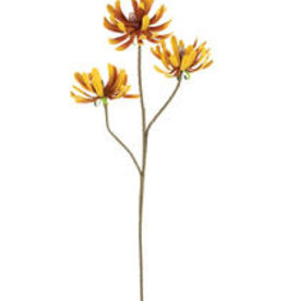 KALALOU Botanica #2491