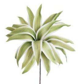 Botanica #786