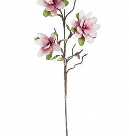 Botanica #2128