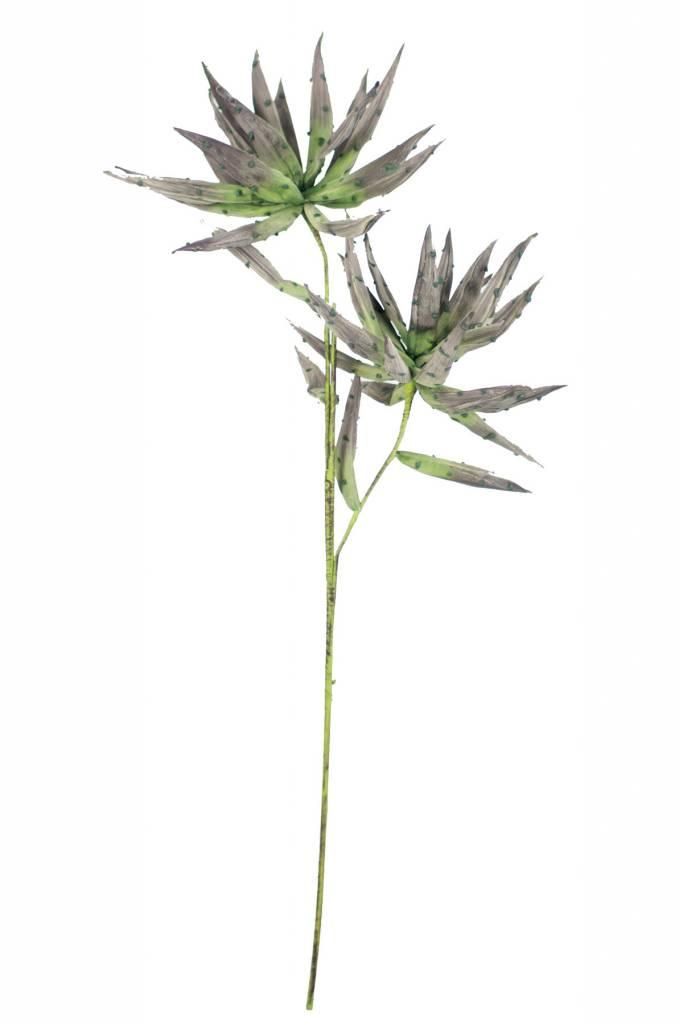 Botanica #2243