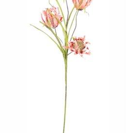 Botanica #2246