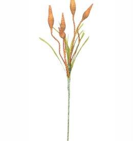 Botanica #2252