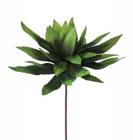 KALALOU Botanica #294 Green Tongue Leaf Plant