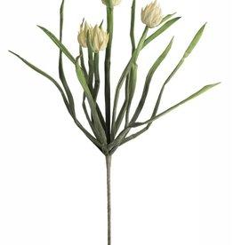 Botanica #2148