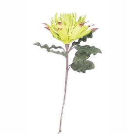 Botanica #899