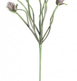 Botanica #2197