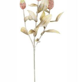 Kalalou Botanica #2278