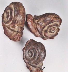 Clay Snail -