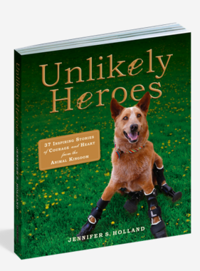 Workman Publishing Co Unlikely Heroes